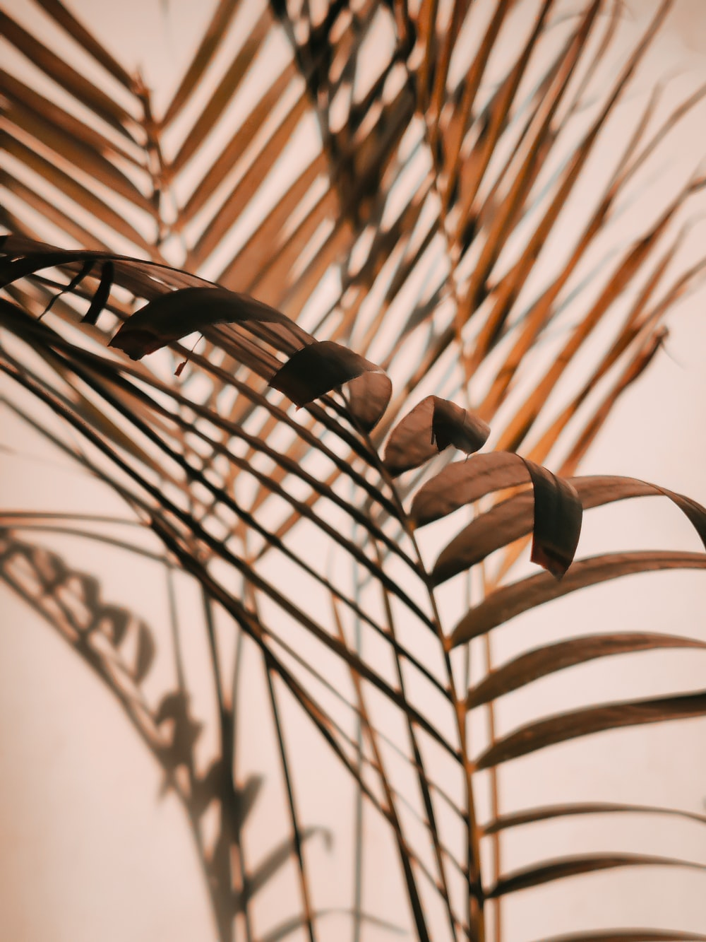 brown leaves in close up photography