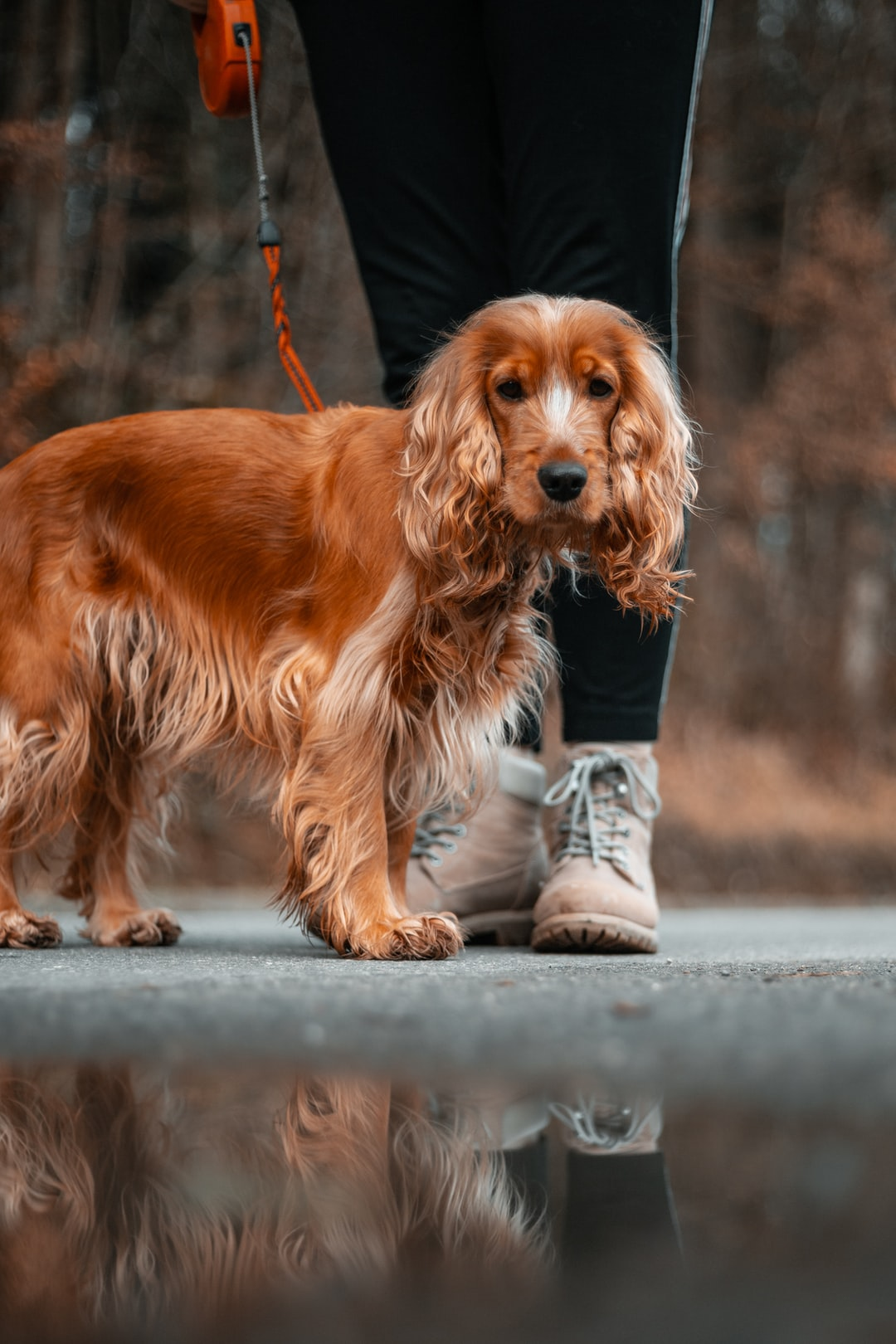 Dog Walking Problems & Solutions