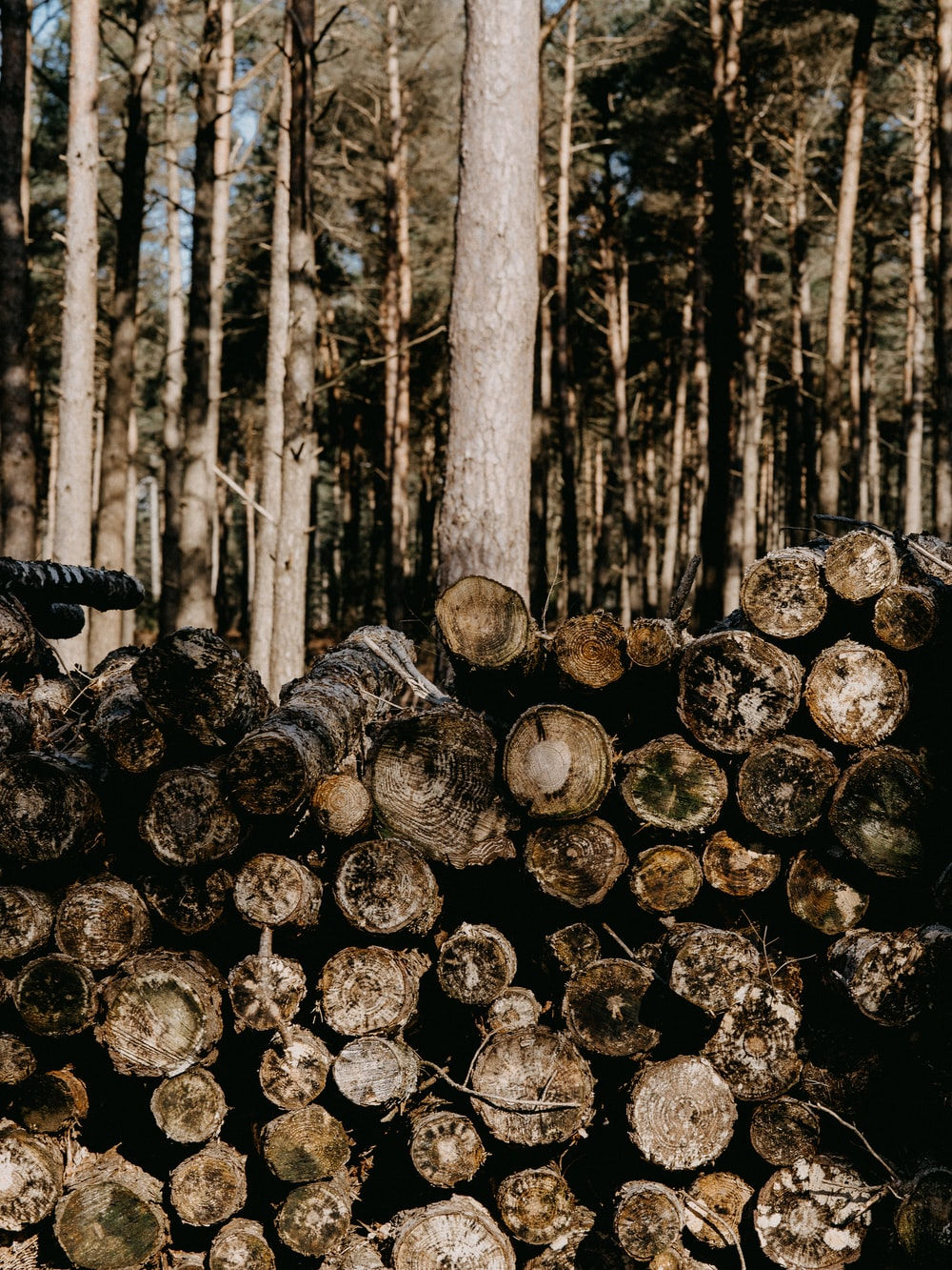 grayscale photography of tree logs