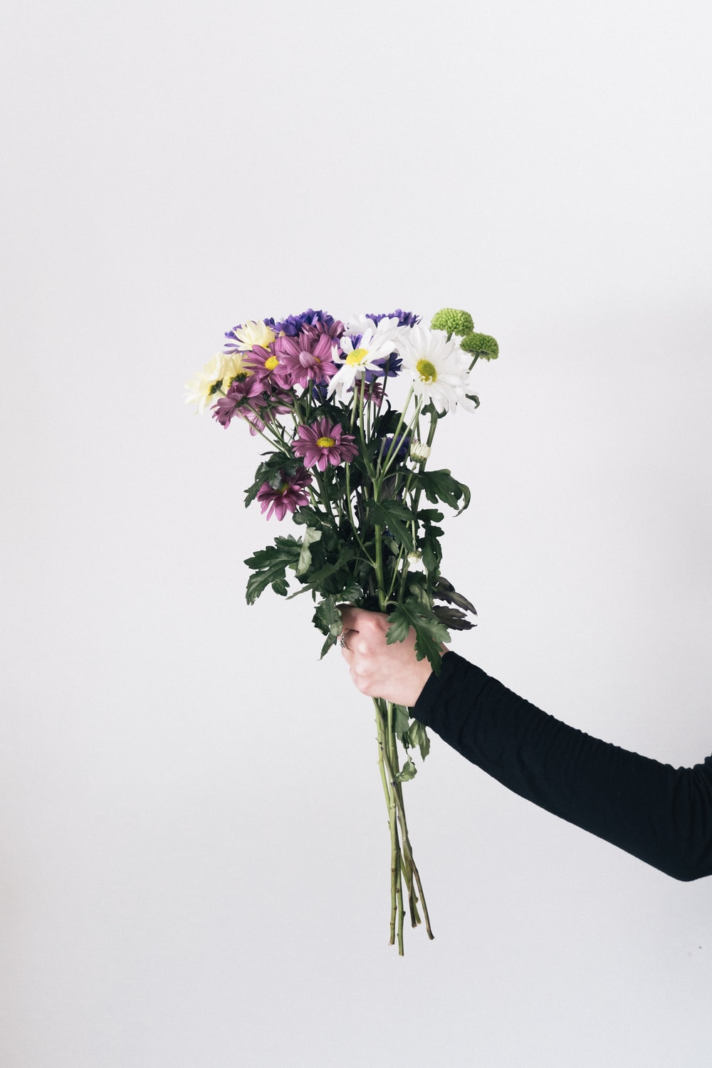 purple and white flowers in persons hand