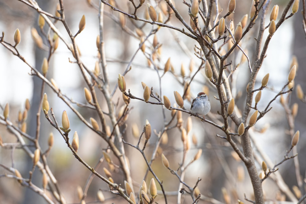 white bird perched on brown tree branch during daytime