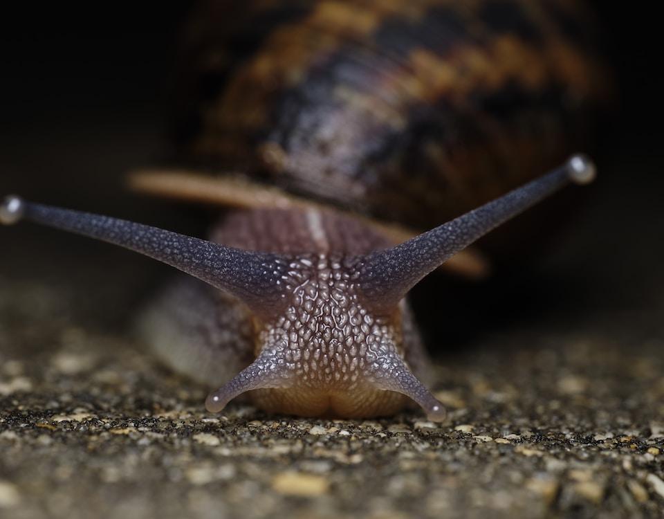 brown snail on gray concrete pavement