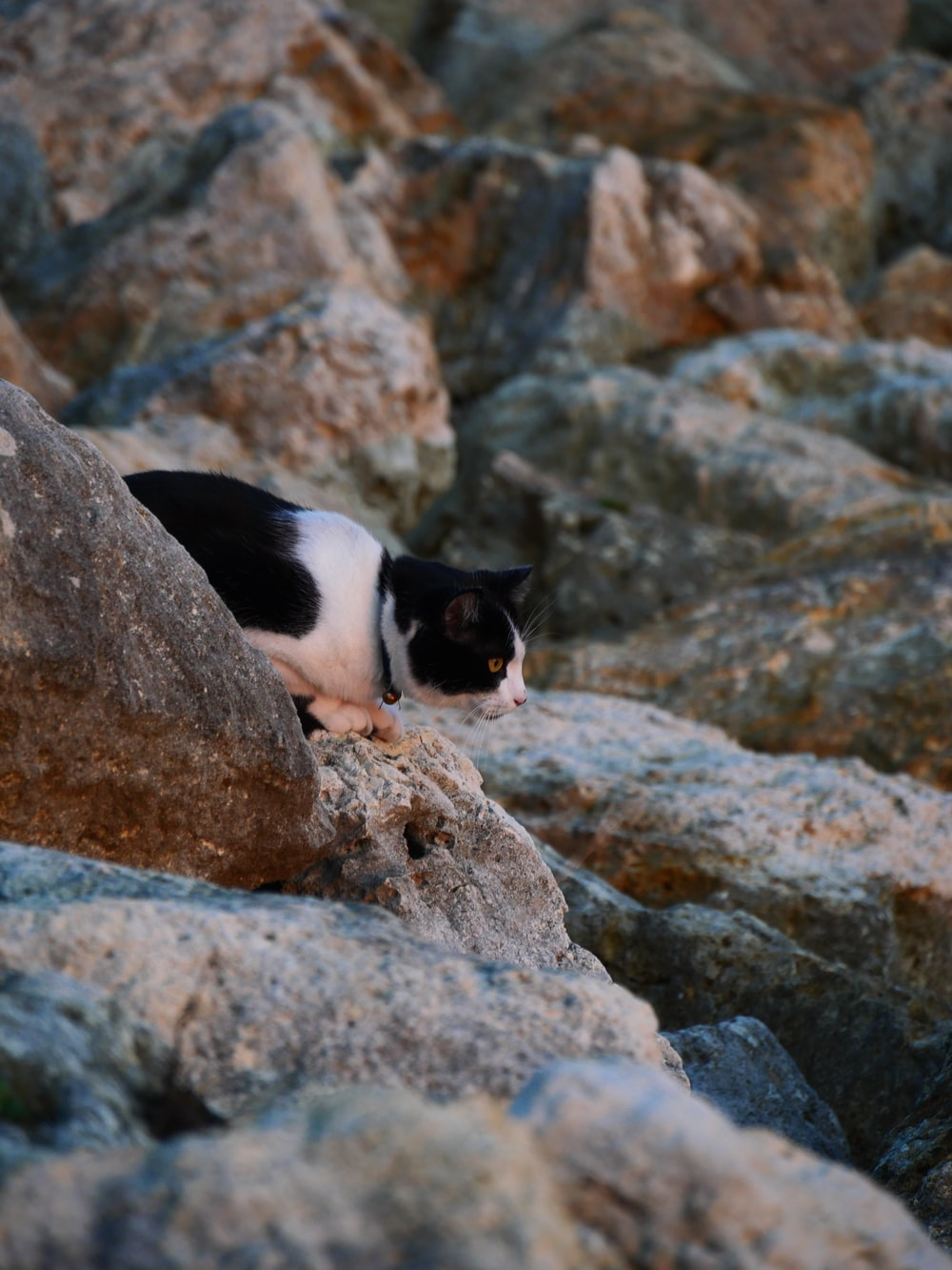 black and white cat on rocky mountain during daytime