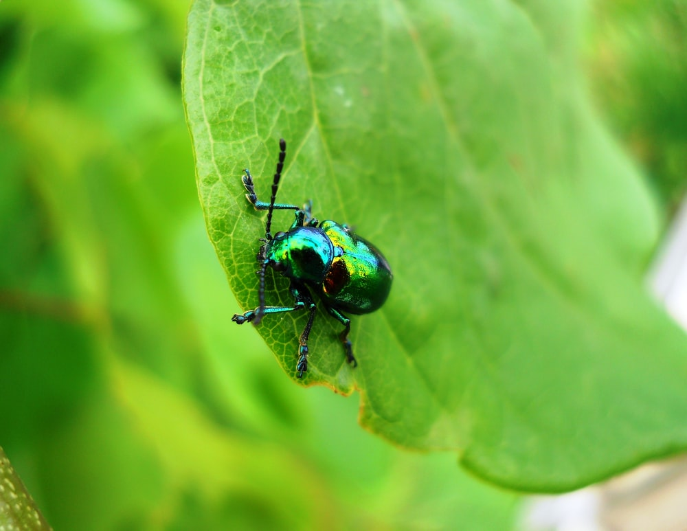 green beetle on green leaf in close up photography during daytime