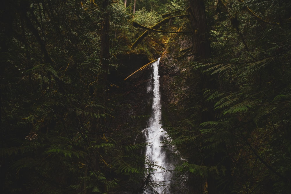 green trees and white water falls