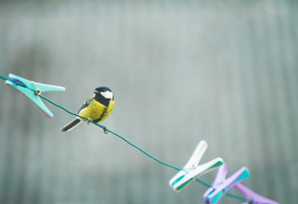 yellow black and white bird on green wire
