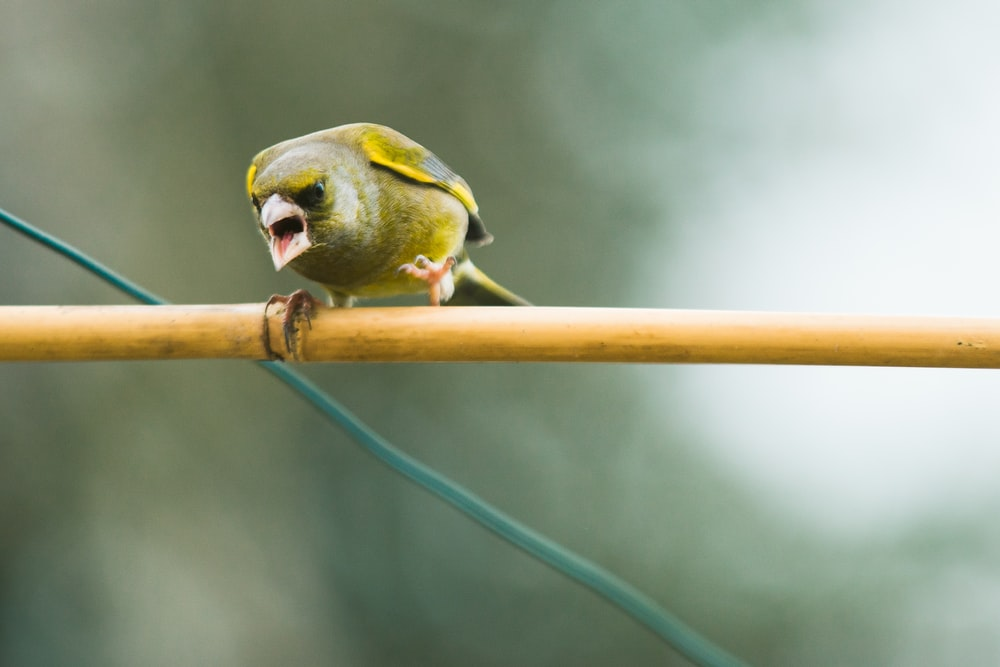 yellow and green bird on brown stick