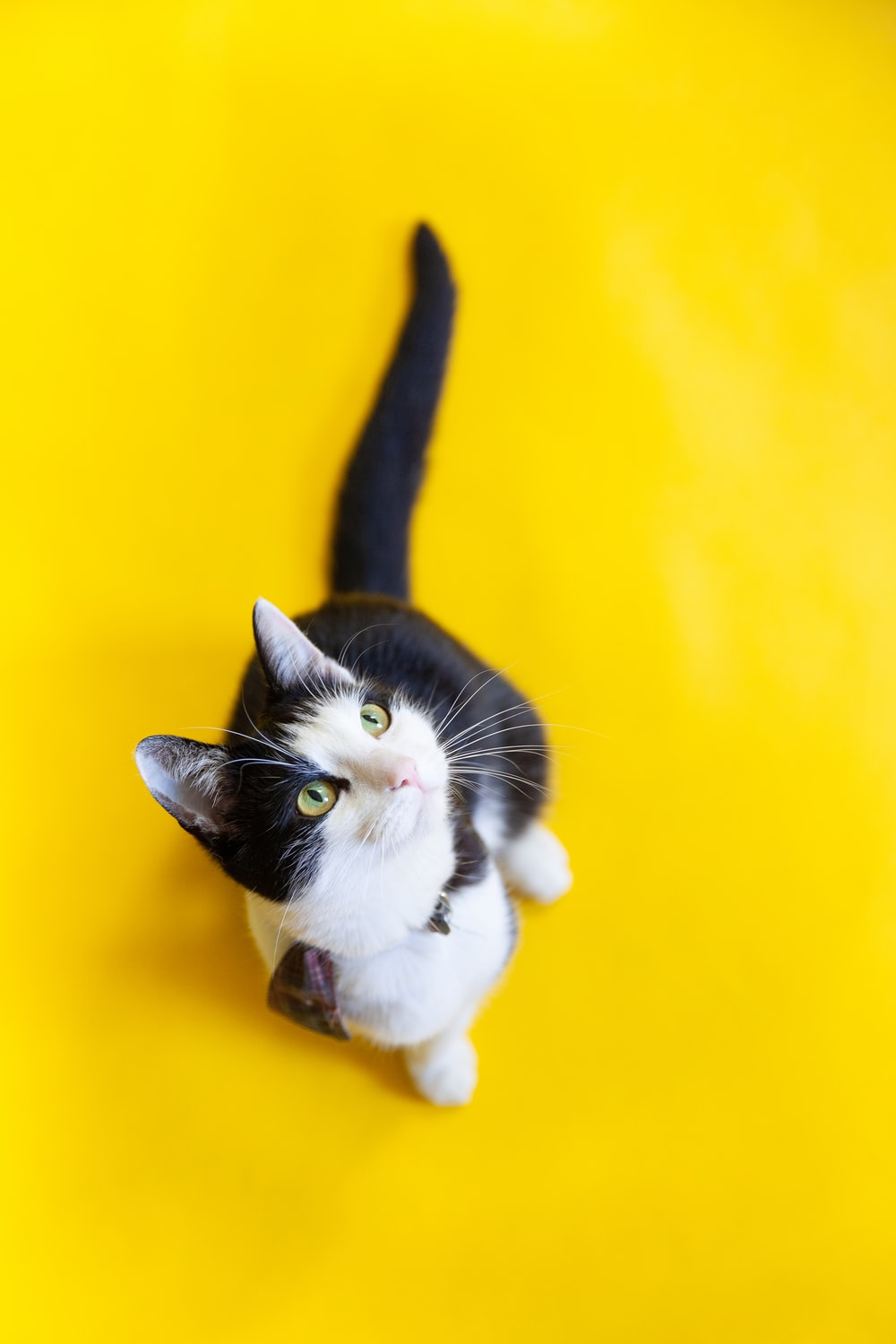 white and black cat on yellow surface