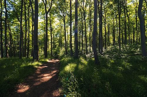 Menschen aus Feuer. Den Weg des Herzens gehen. Ein Pilgertag im Oberpfälzer Wald am 10. Oktober 2021