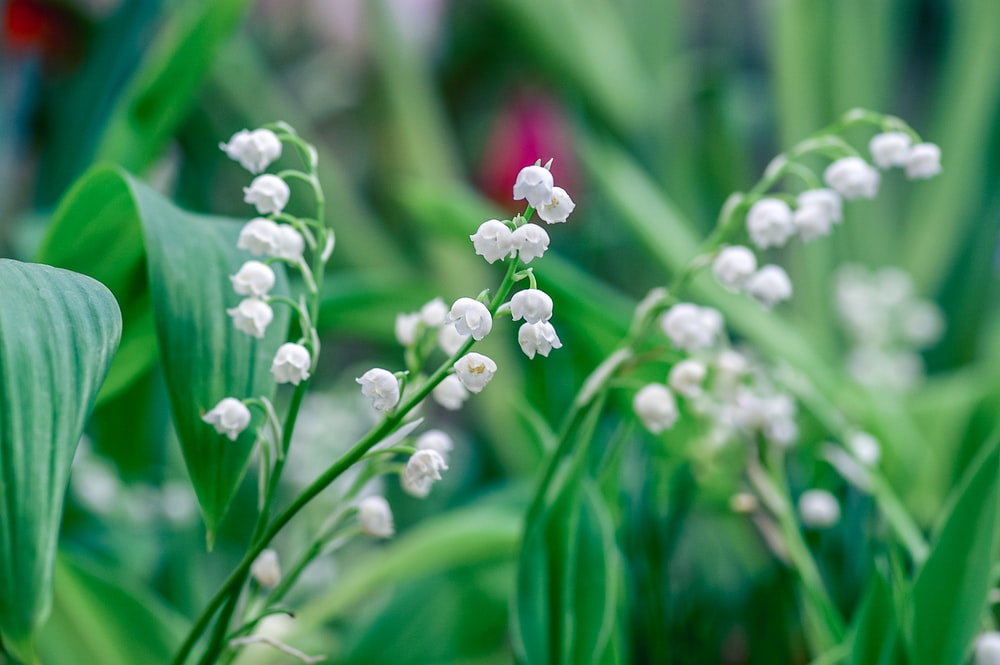 white and pink flower bud in macro lens photography