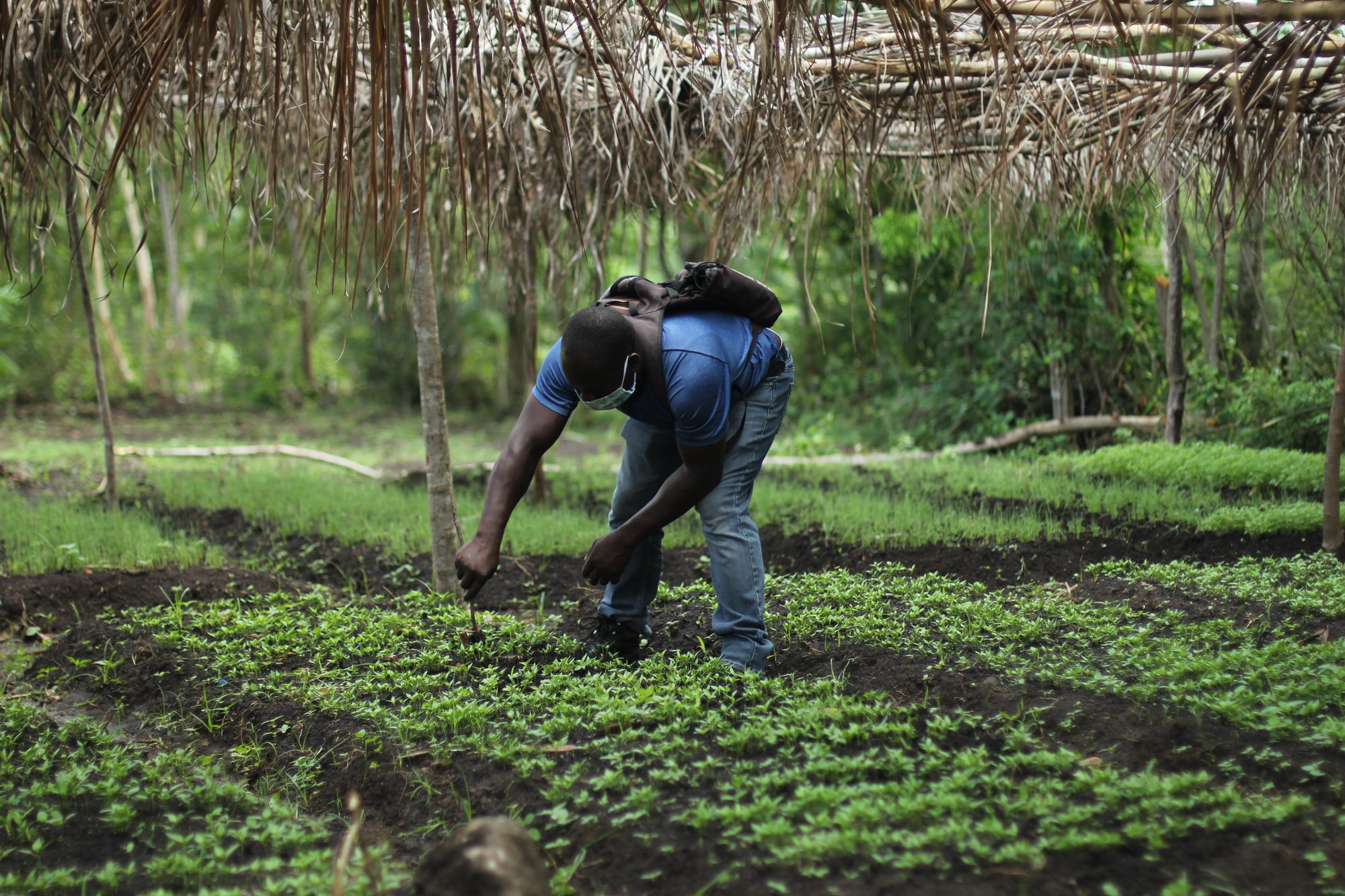 UNAJUA S4 EP2: What effect does access to certified inputs have on overall farmer success? feat. Karidas Tshintsholo