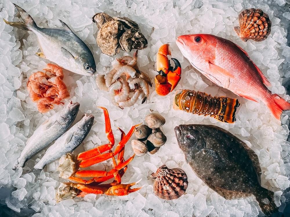 orange and white fish on white and black pebbles