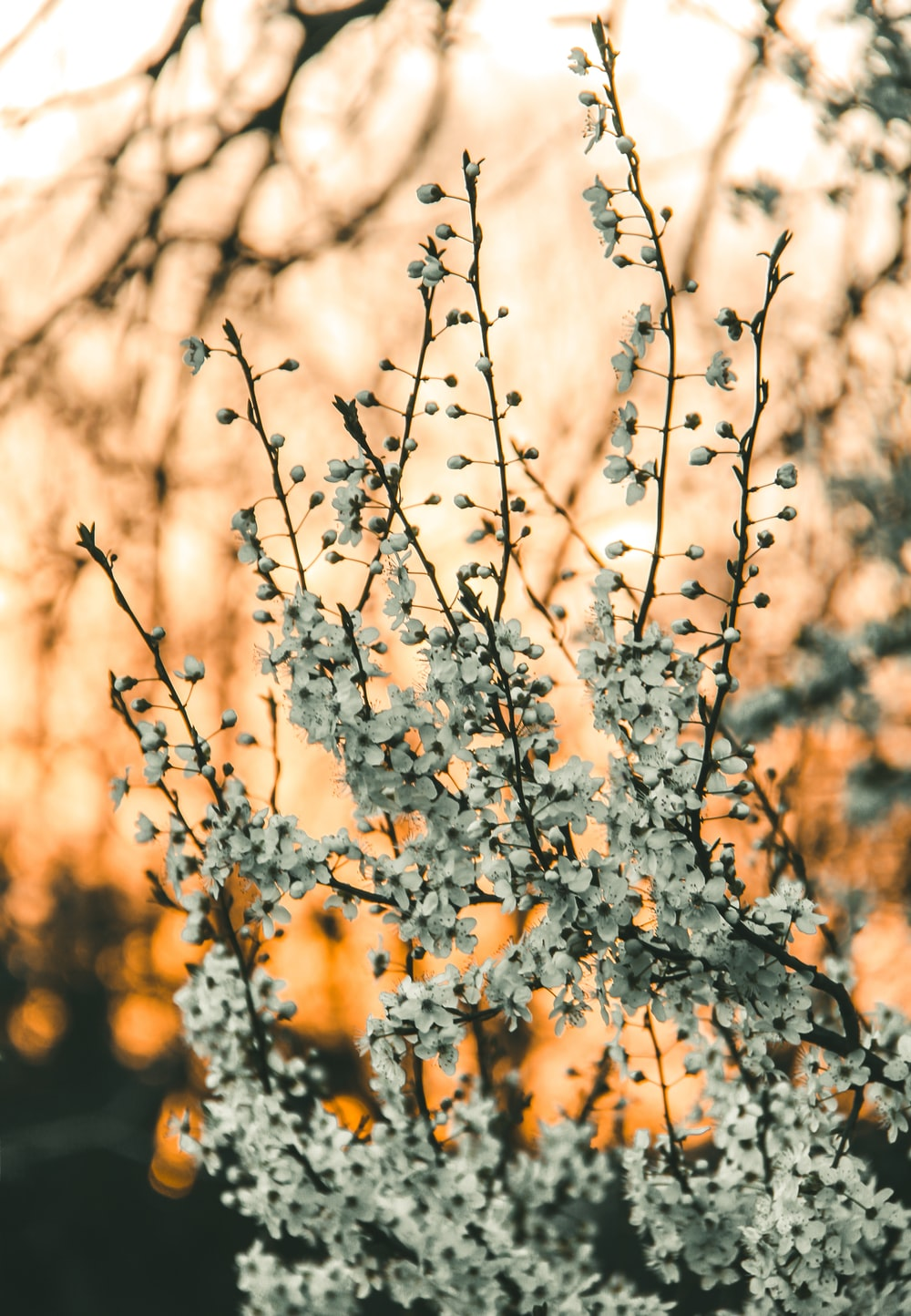 brown tree with white flowers