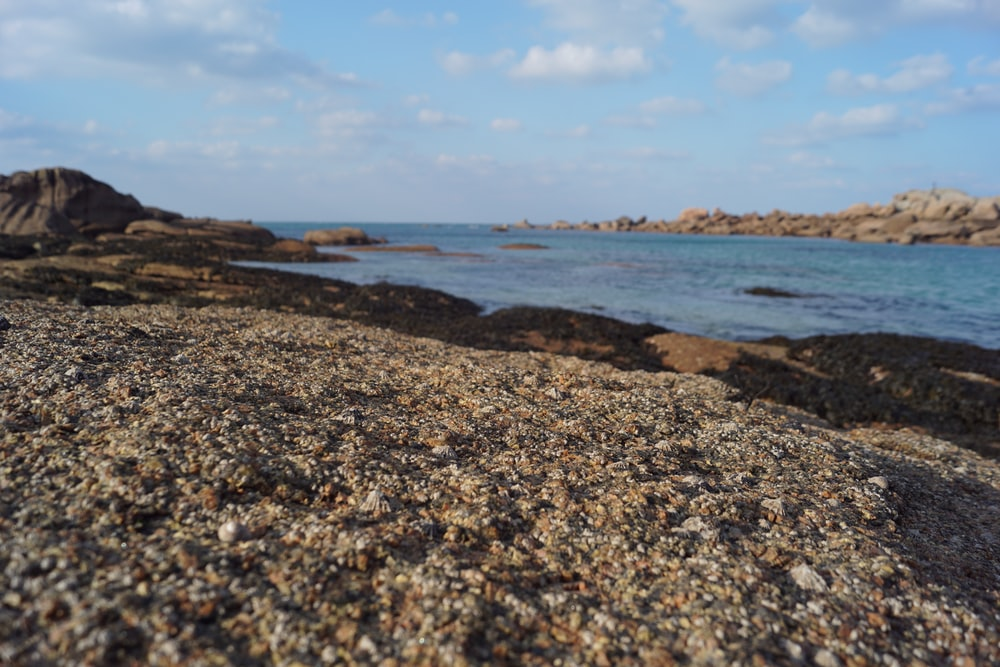 brown and gray rocky shore under blue sky during daytime