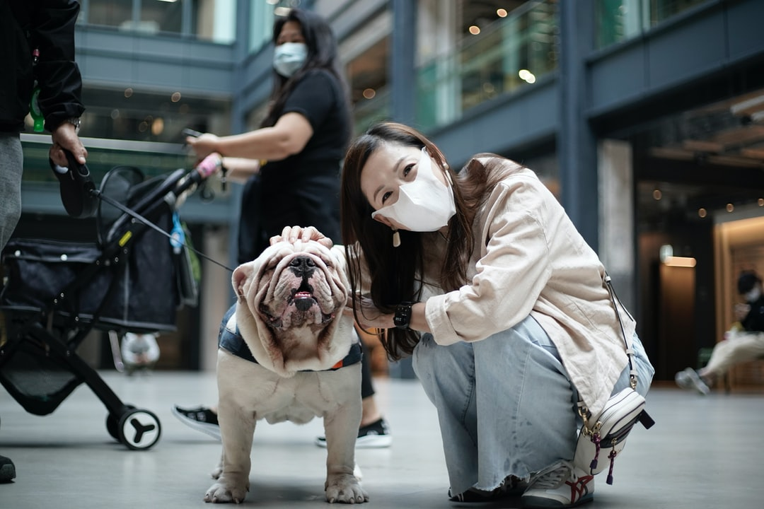 Meet the Dog In Shopping Mall - unsplash