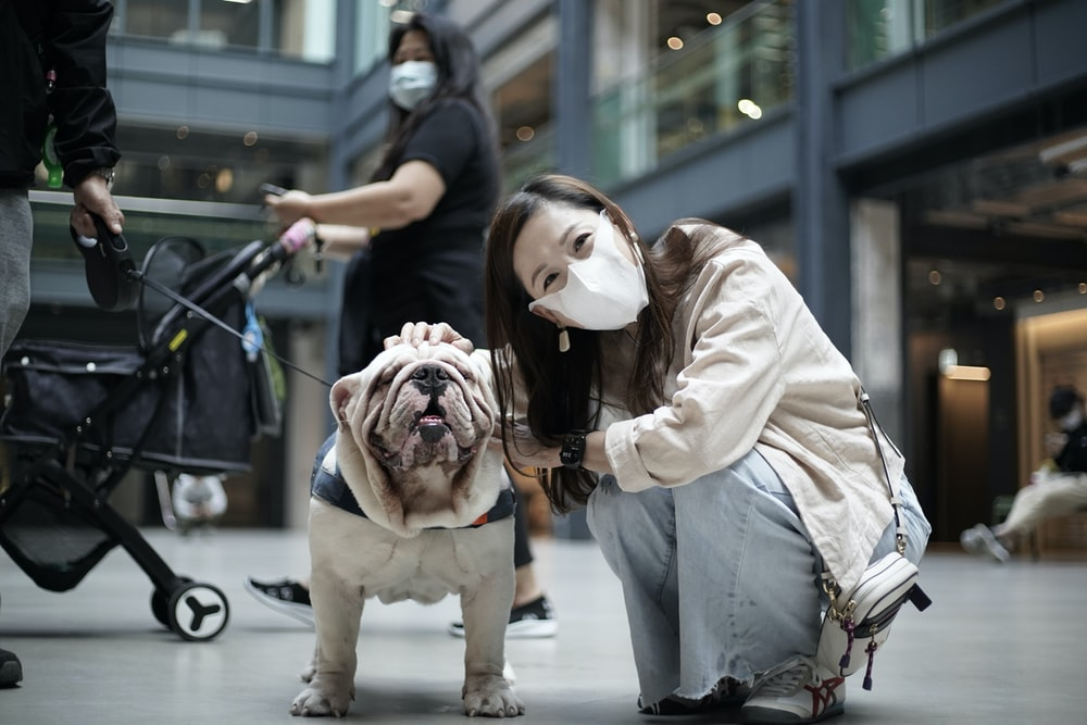 girl in white long sleeve shirt holding white and brown short coated dog