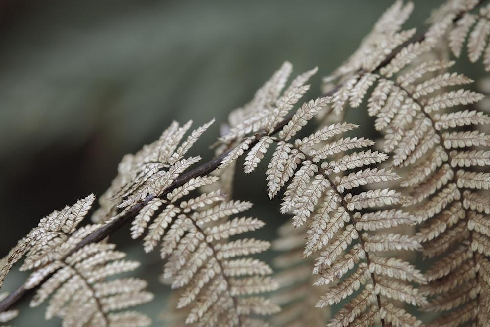 brown leaf in macro lens