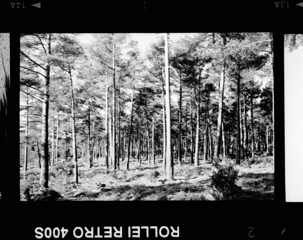 grayscale photo of forest during daytime
