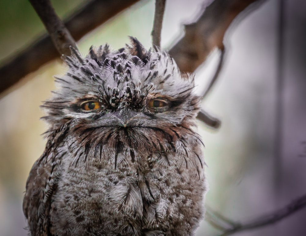 gray and white owl perched on brown tree branch