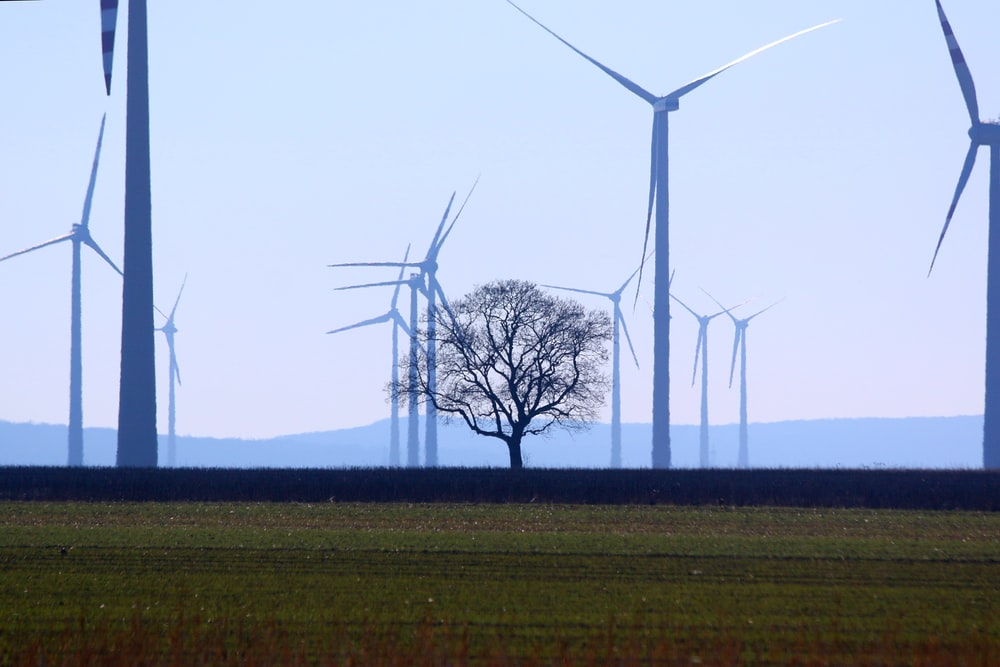 green grass field with wind turbines