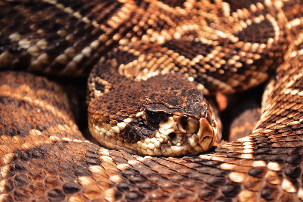 black and white snake skin