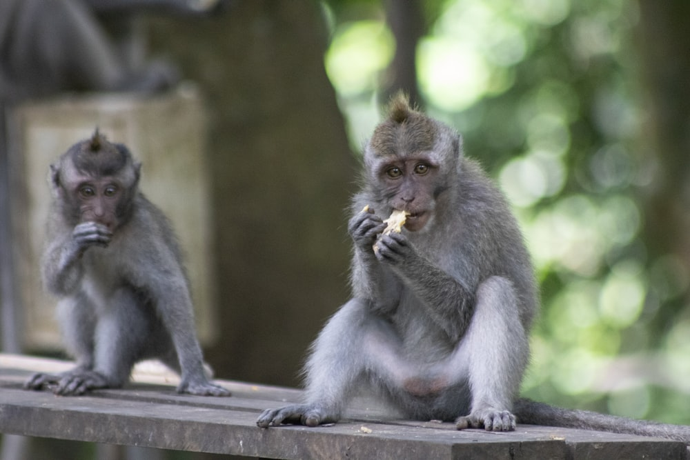 gray monkey sitting on gray concrete surface during daytime