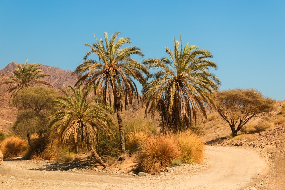 green palm trees on brown sand during daytime