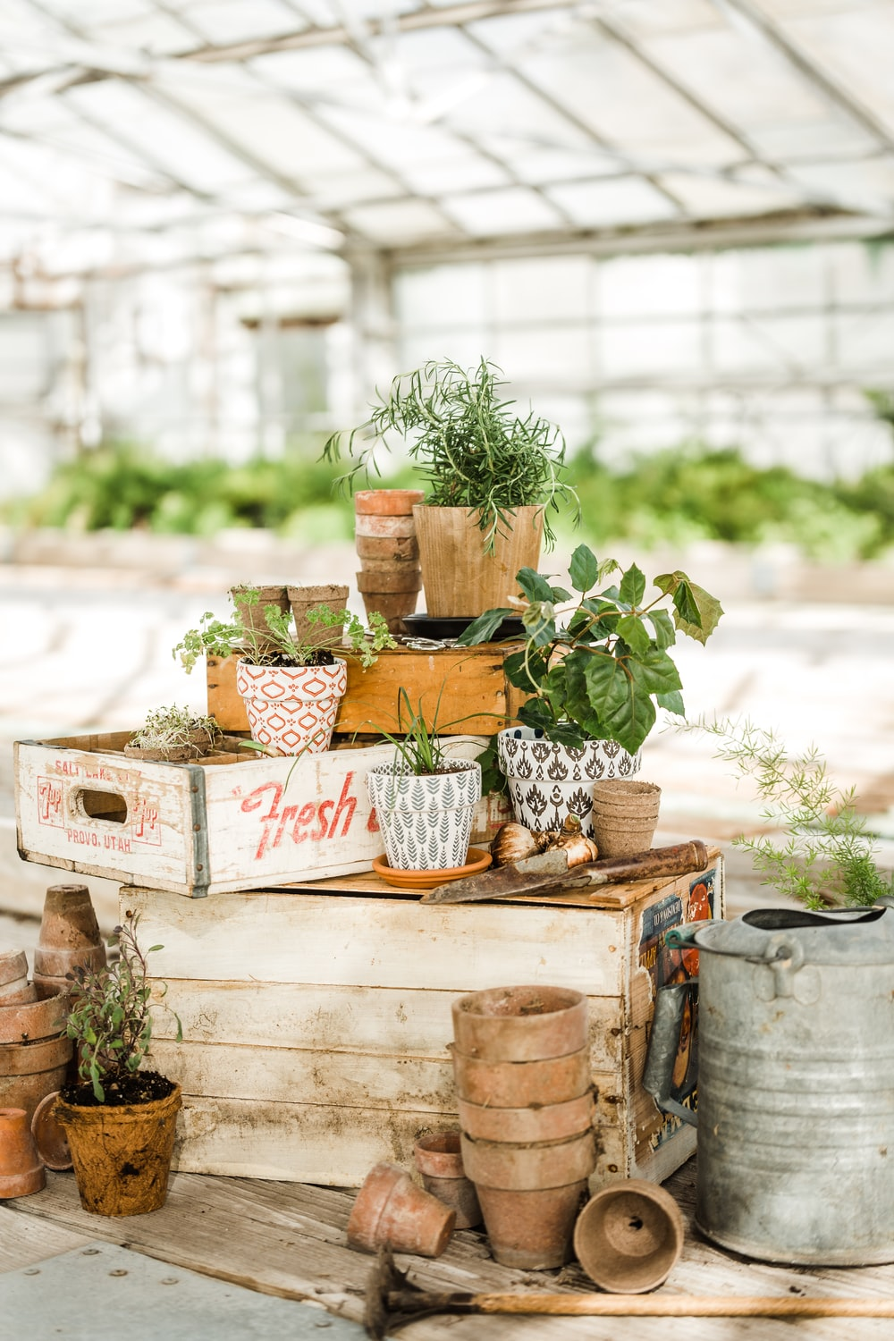 green potted plants on white wooden crate