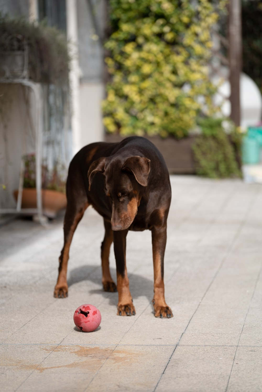black and tan short coat medium sized dog on grey concrete pavement during daytime