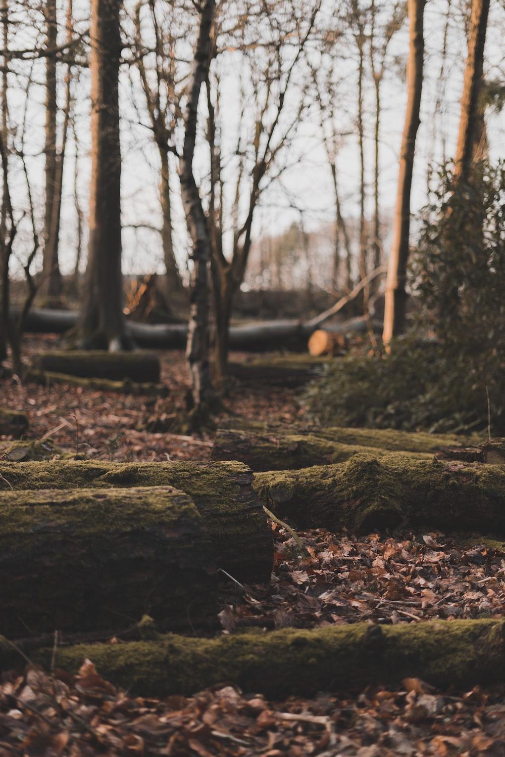 brown tree log on brown soil during daytime