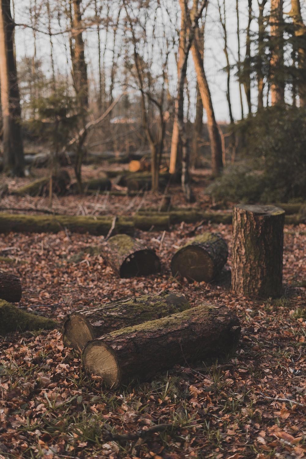 brown tree log on ground