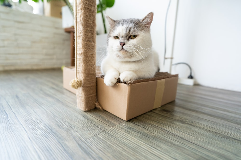 white and gray cat in brown cardboard box