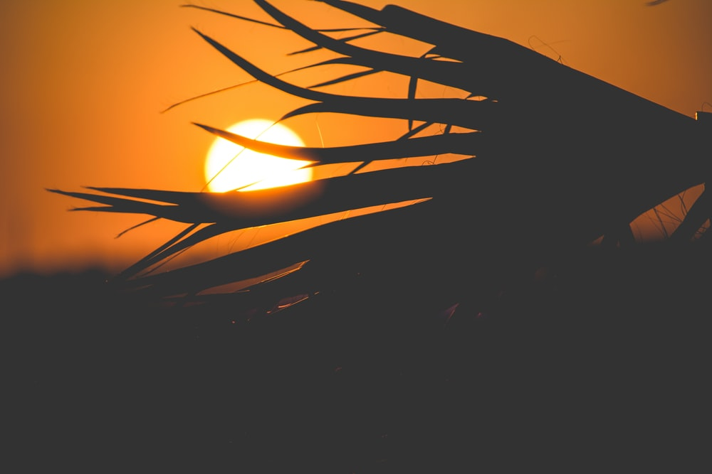 sun behind silhouette of plant