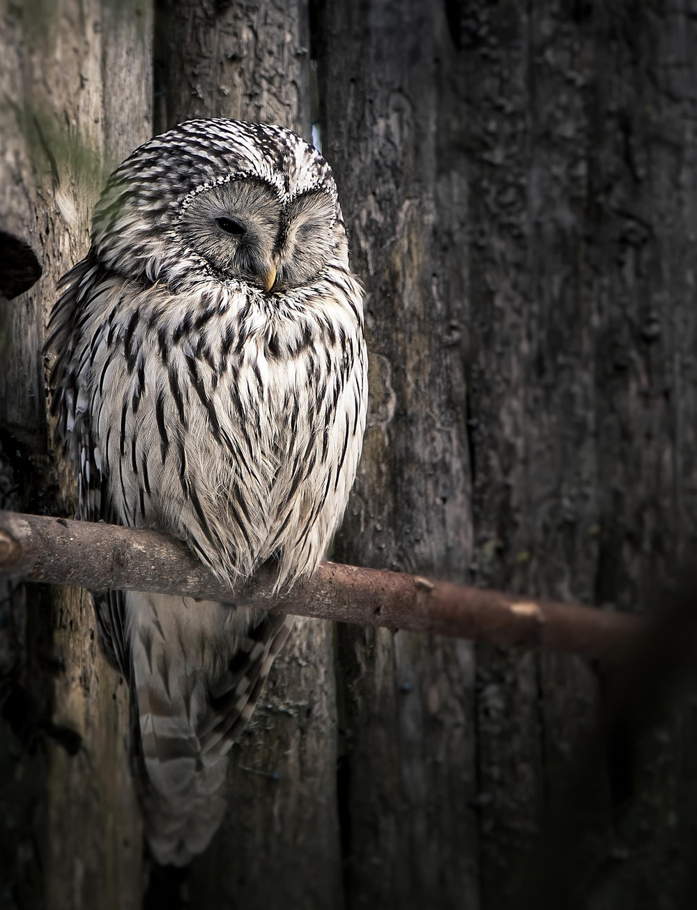 white and black owl on brown tree branch