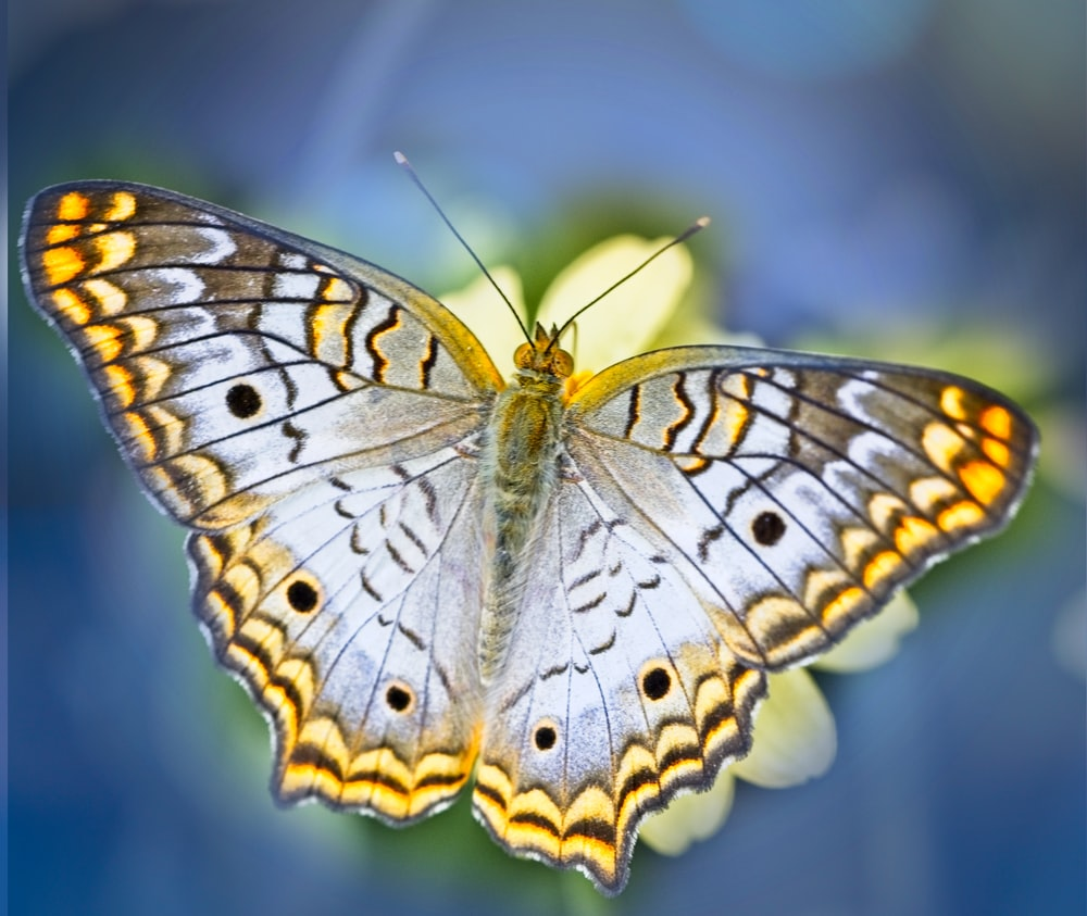 brown and black butterfly in close up photography