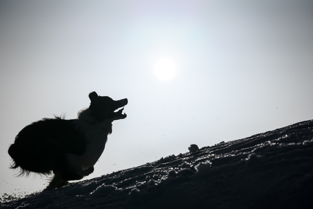 black and white short coated dog on snow covered ground during daytime