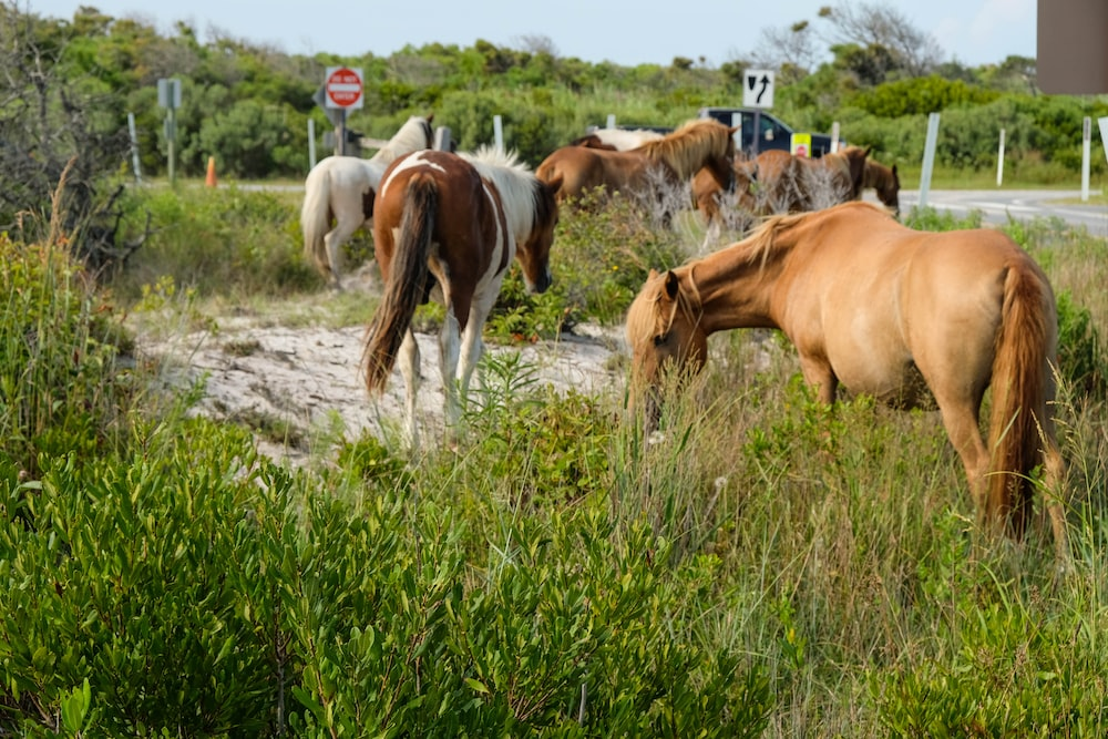 brown and white horses on green grass field during daytime