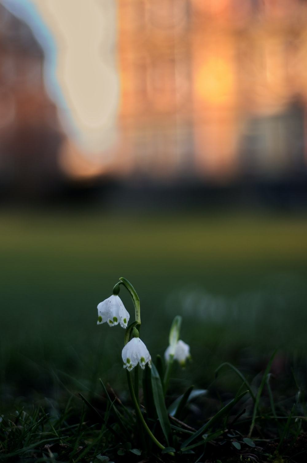 white flowers on green grass field during daytime