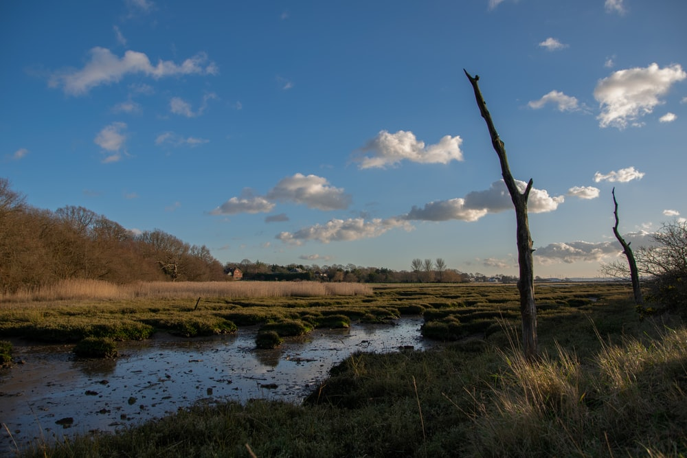 bare trees beside river under blue sky during daytime