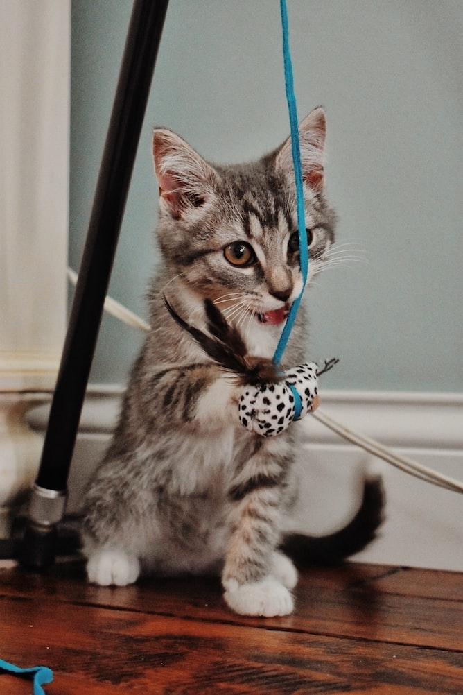 How to Improve Your Cat Behavior