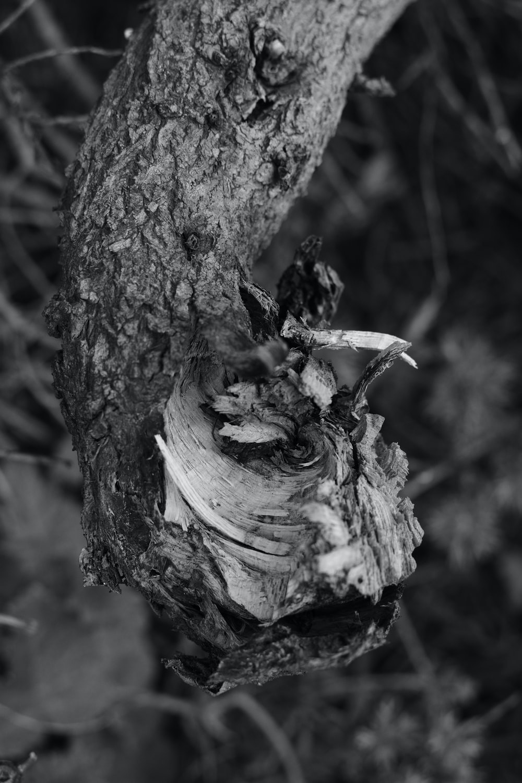 grayscale photo of bird on tree trunk
