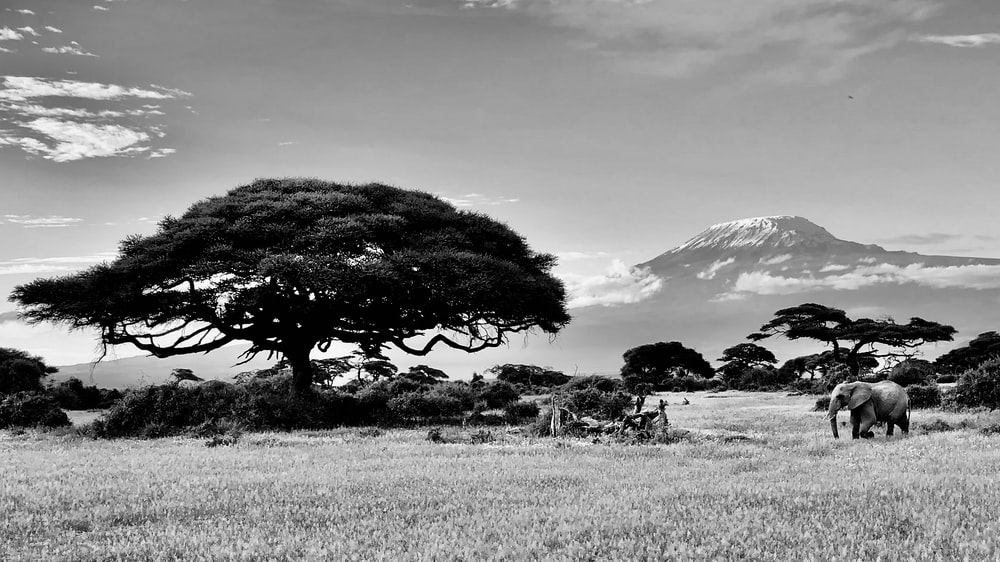 grayscale photo of trees on grass field