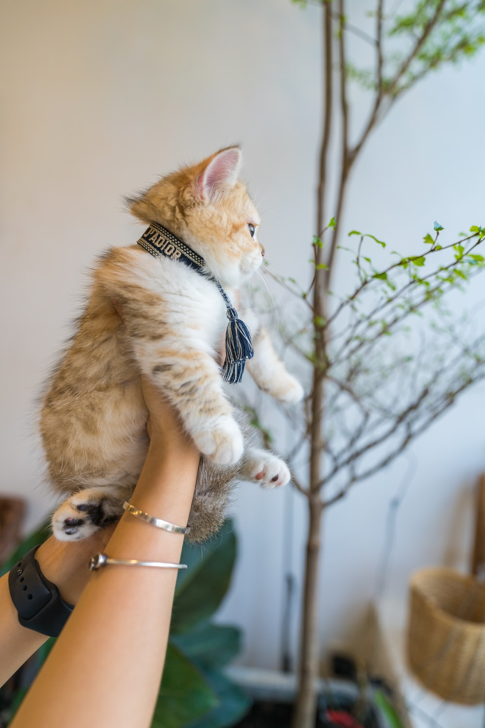 person holding brown and white cat