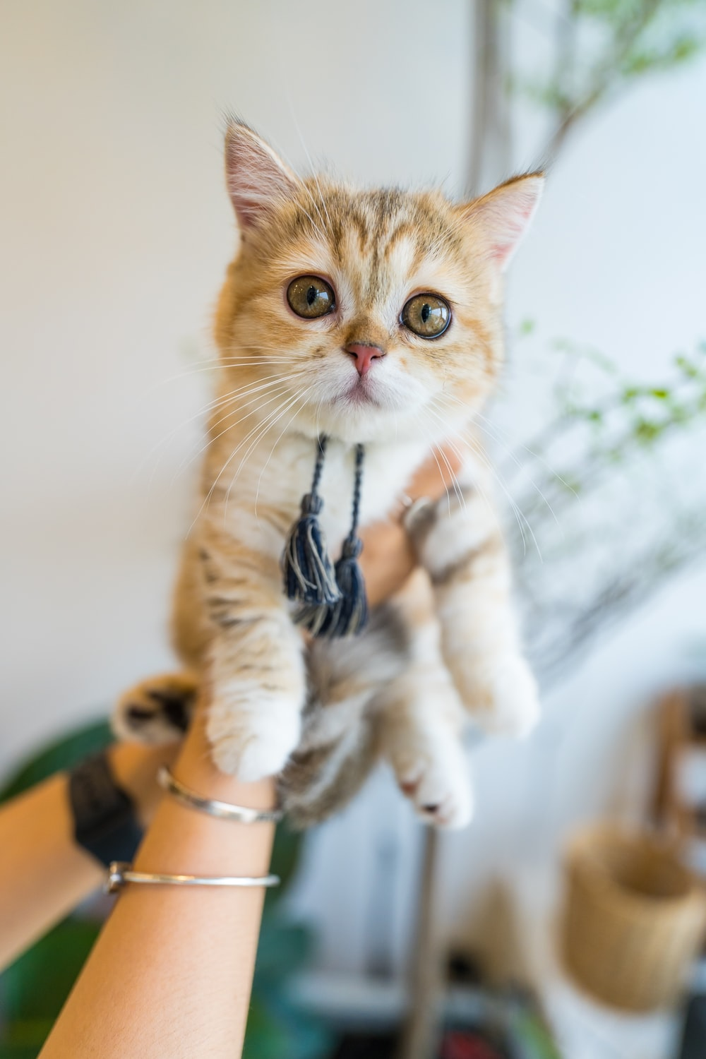 orange tabby cat on persons hand