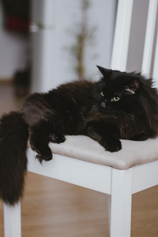 black cat on white wooden table