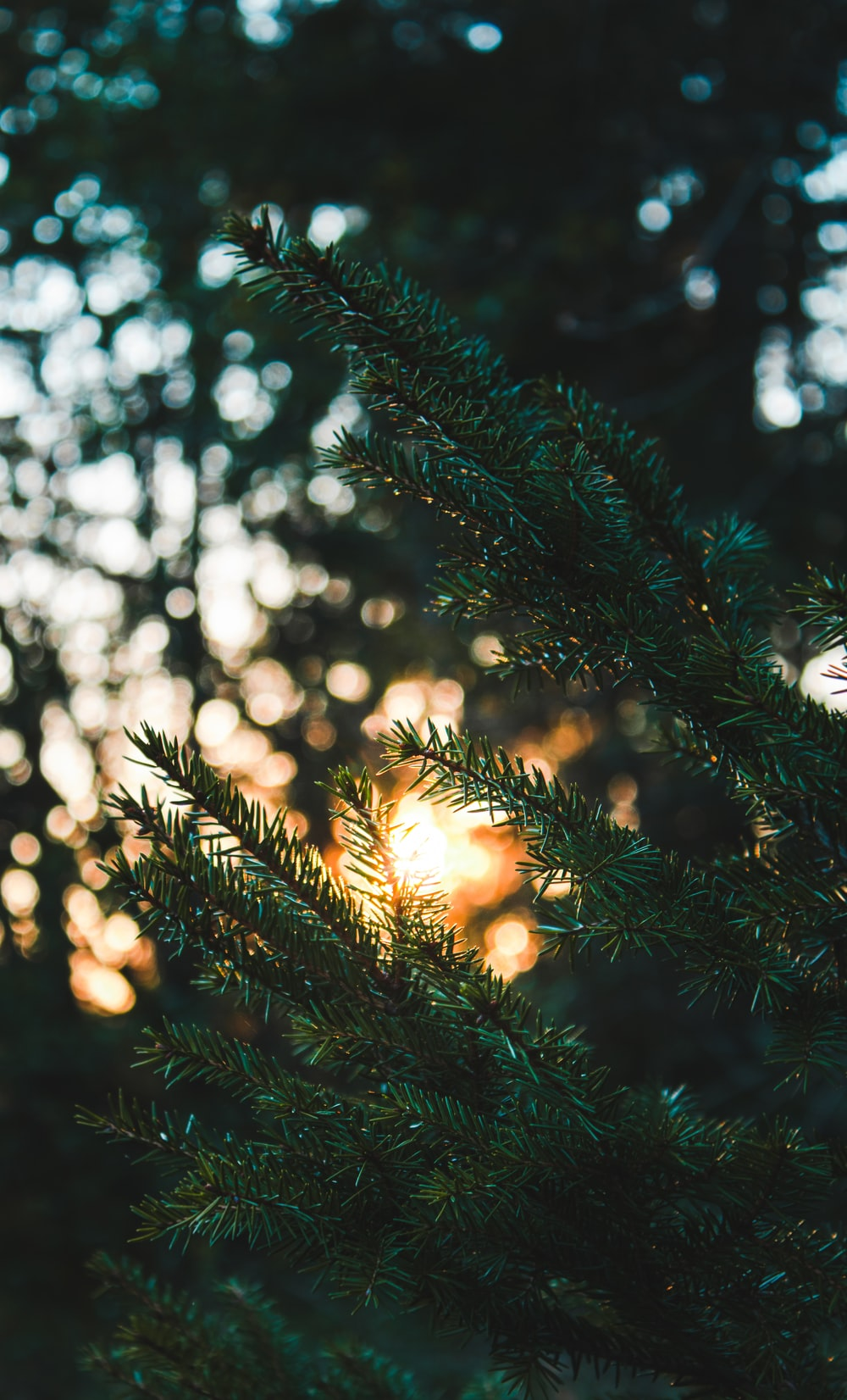 green pine tree with string lights