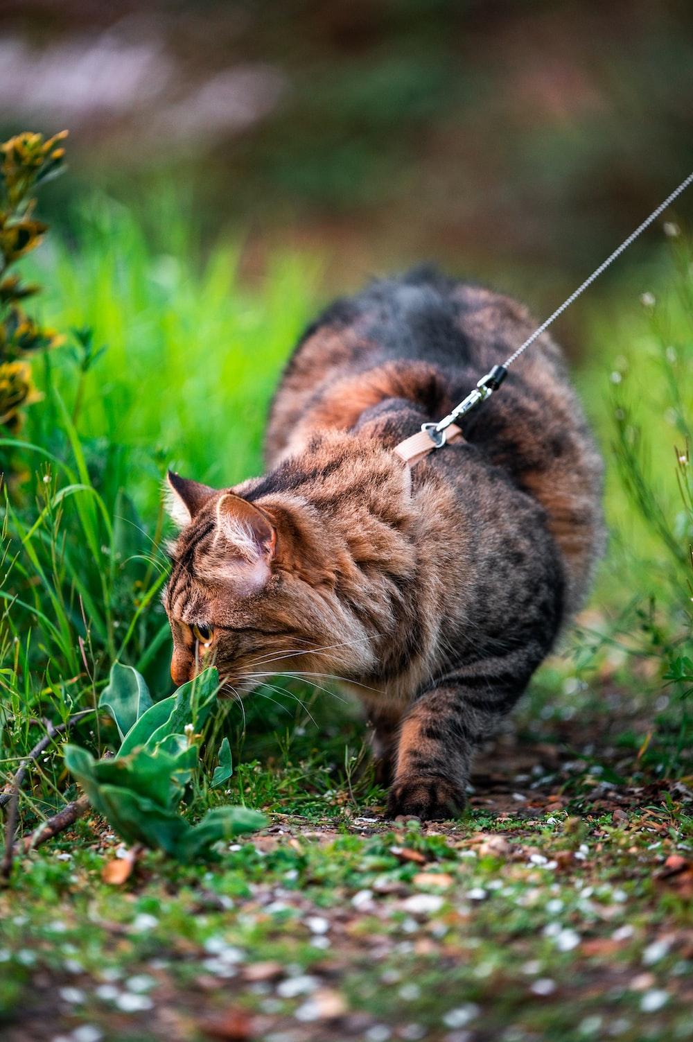brown tabby cat on green grass field