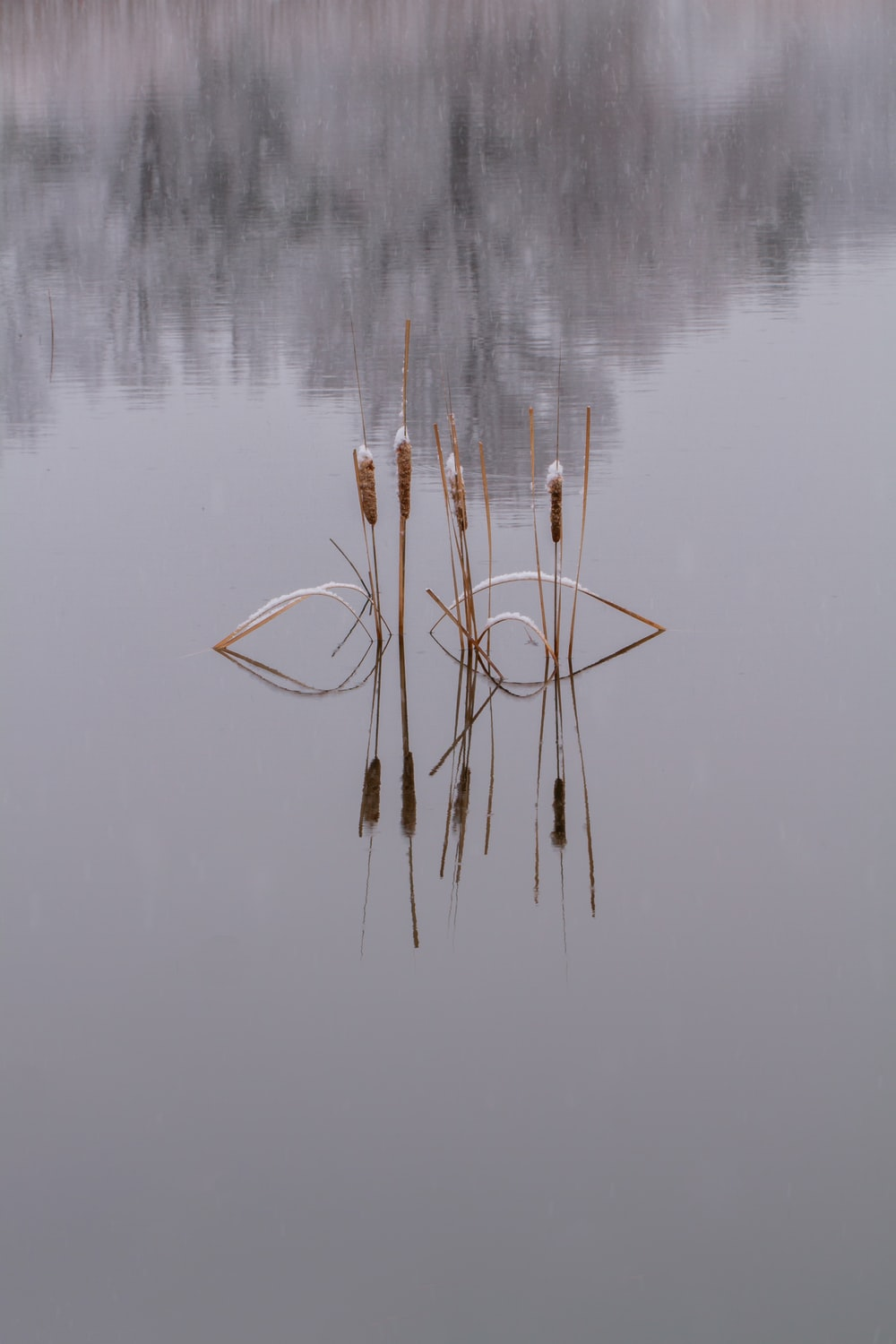 brown stick on body of water