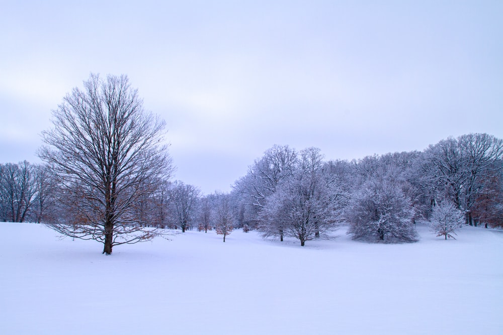 bare trees on snow covered ground under white sky during daytime