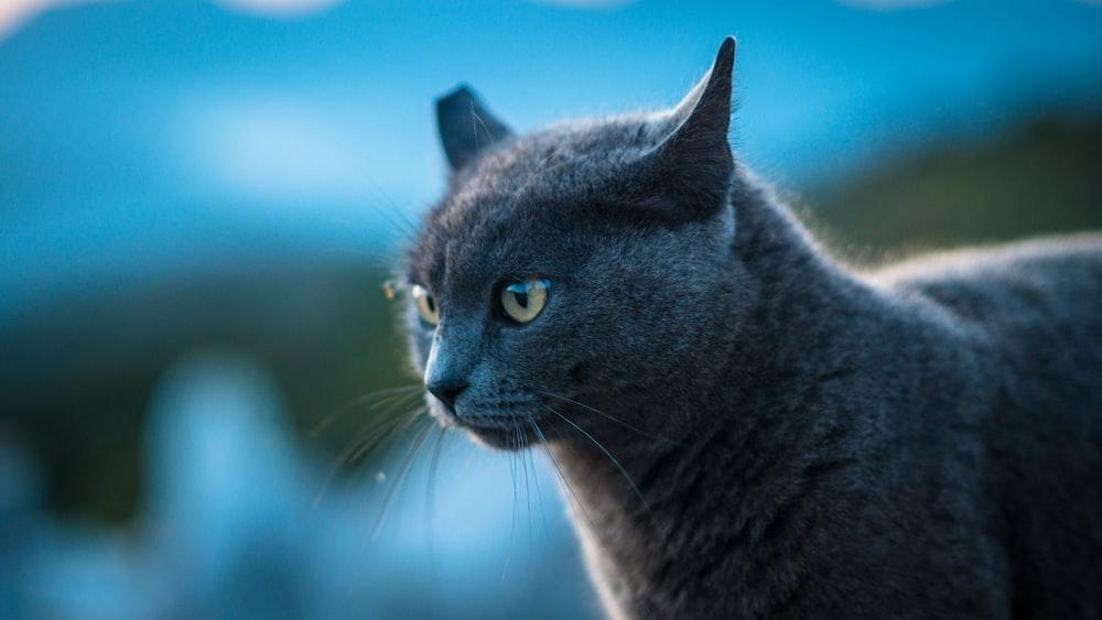 black cat in bokeh photography